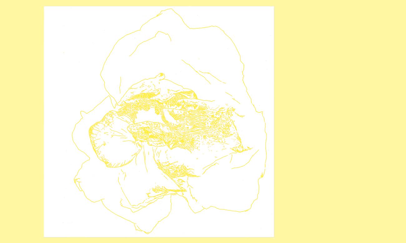 flower_natura3b